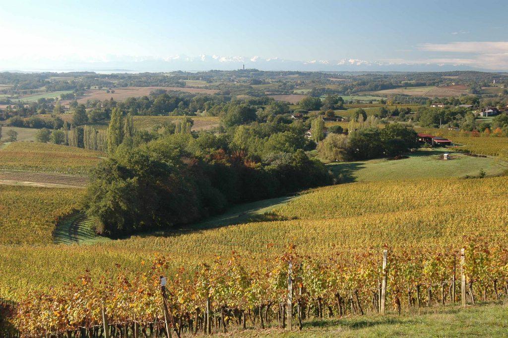 Vignoble St Mont avec Pyrénées
