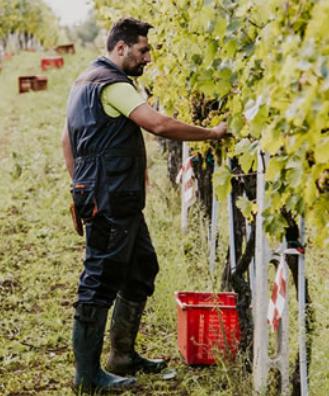 Leo Felici vineyard